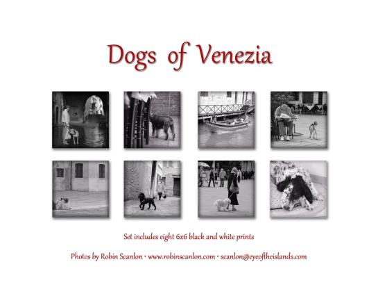 Dogs of Venezia