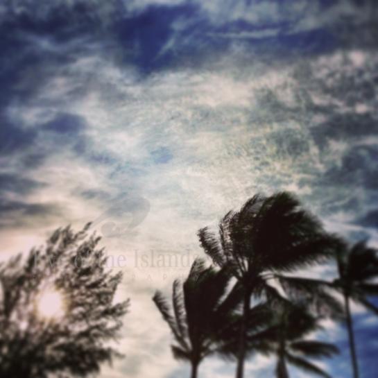Coconut skies