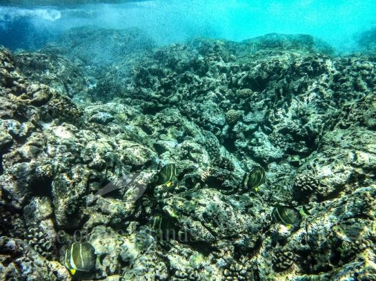 Underwater, watershot, hawaii