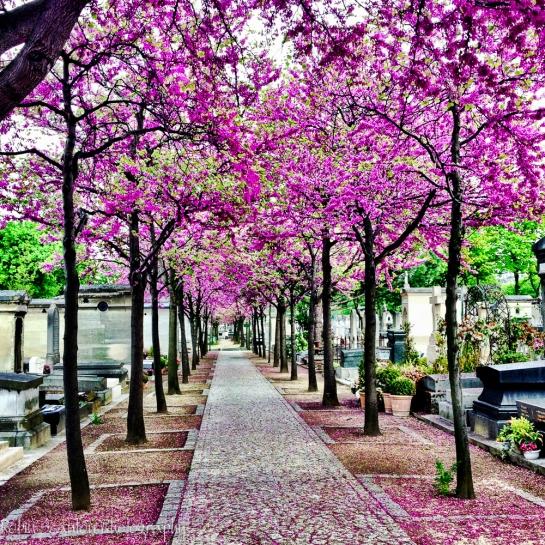 Montparnasses Cemetary