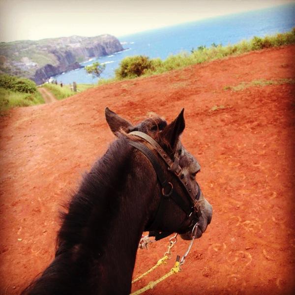 Horseback-8783.jpg