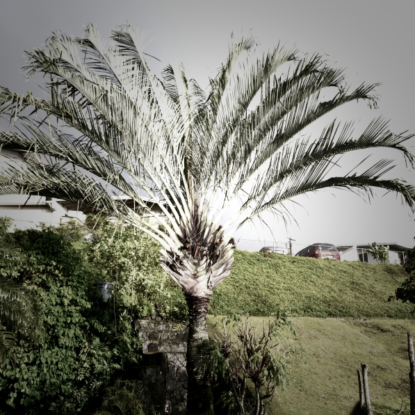 Our triangle palm