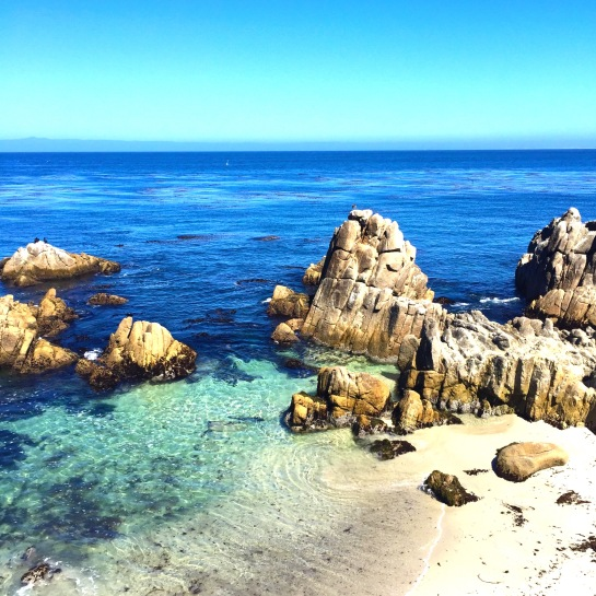 This site before arriving at Asilomar State Park took my breath away. I will never ever get over the beauty of the ocean. It just hits me in the gut.